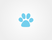 Looking for peacy papy, Hasky or any dog type for free adaption...